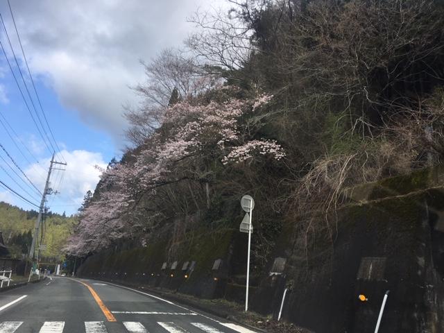 笠トンネル 4月15日